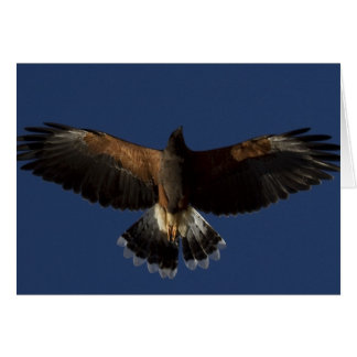 Harris Hawk 7 Card