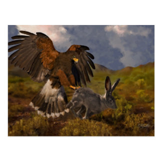 Harris Hawk and Jackrabbit - acrylic Postcard