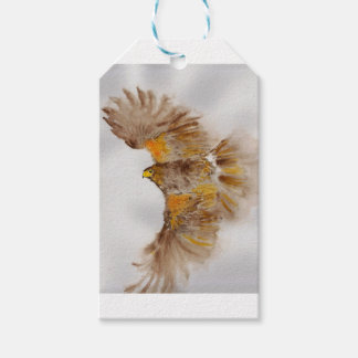 Harris Hawk, Bird of Prey Gift Tags