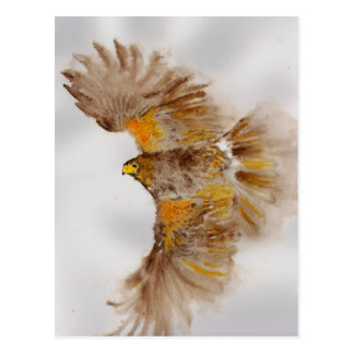 Harris Hawk, Bird of Prey Postcard