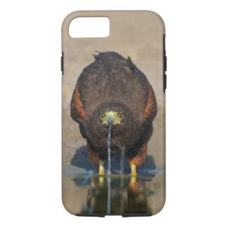 Harris Hawk Drinking Water - Birder's iPhone7 Case