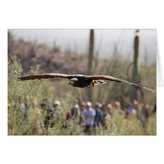 Harris Hawk in Flight Card