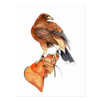 Harris hawk on Glove postcard