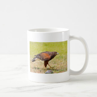 Harris Hawk walking on grass Coffee Mug