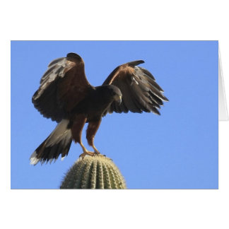 Harris's Hawk 1 Card