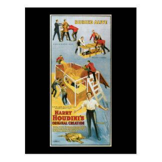 Harry Houdini, Buried Alive Vintage Poster, 1914 Postcard