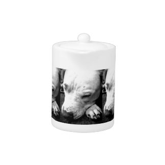 harry potter scar dog white pit bull