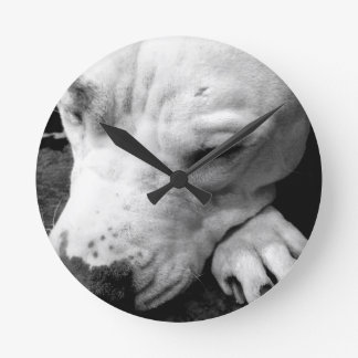 harry potter scar dog white pit bull clocks