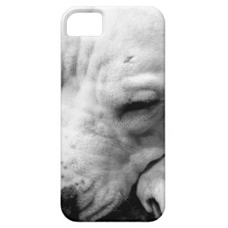 harry potter scar dog white pit bull iPhone 5 covers