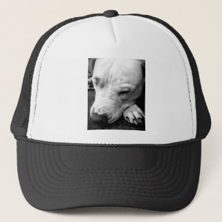 harry potter scar dog white pit bull trucker hat