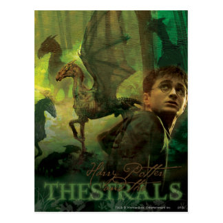Harry Potter Thestrals Postcard