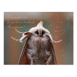 Harry the Hairy Moth Postcard