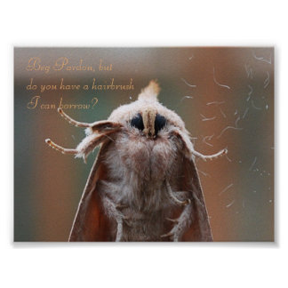 Harry the Hairy Moth Poster