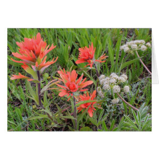 Harsh Paintbrush and Sitka Valerian Greeting Card