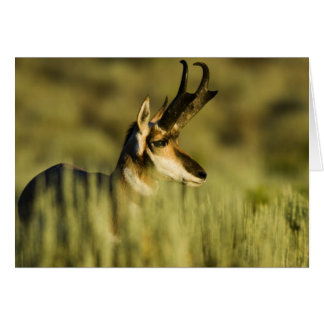 Hart Mountain National Antelope Refuge, Oregon, Card