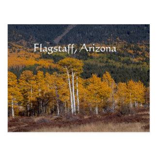 Hart Prairie Flagstaff,Arizona Postcard