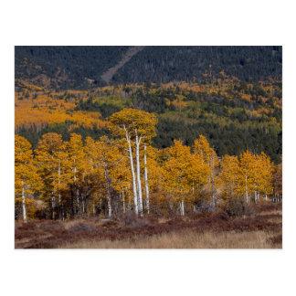 Hart Prairie Postcard