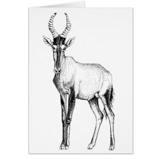 Hartebeest Antelope  study Birthday Card