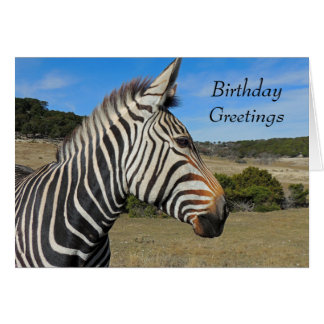 Hartmann's Zebra Portrait Birthday Card
