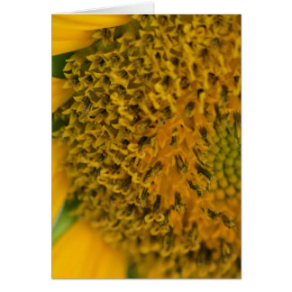 Harvest Flower card