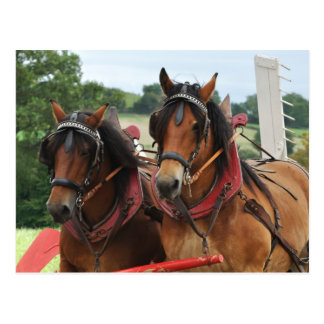 Harvest horse team photo postcard