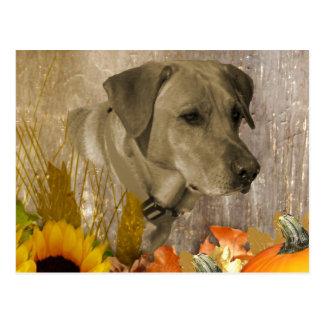 Harvest Labrador Retriever Postcard