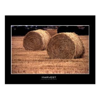 Harvest   Postcards