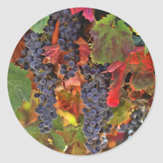 Harvest Vineyard Wine Country Stickers