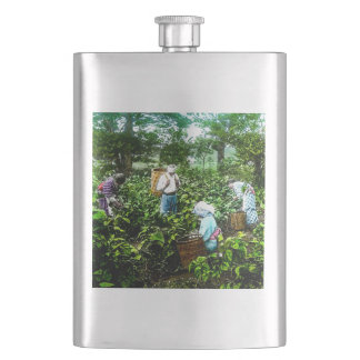 Harvesting Green Tea Leaves Old Japan Farmers Hip Flask