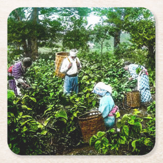 Harvesting Green Tea Leaves Old Japan Farmers Square Paper Coaster