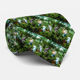 Harvesting Green Tea Leaves Old Japan Farmers Tie