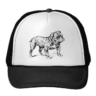 Hat Bulldog