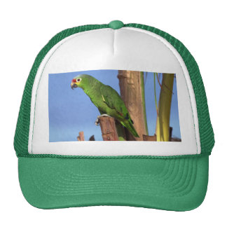Hat-Parrot Picture Cap