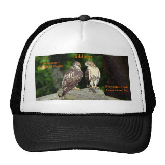 Hat/ showing adolescent hawks out on their own.