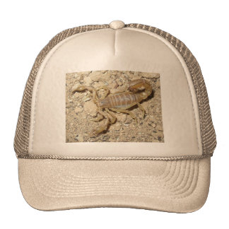 Hat with Scorpion