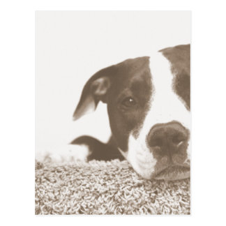 hate the deed not the breed friendly pitbull sepia postcard
