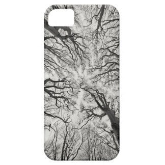 Haunting Trees Black and White iPhone 5 Case