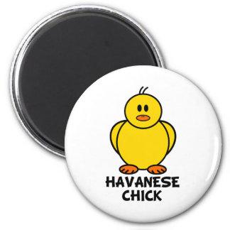 Havanese Chick Magnet