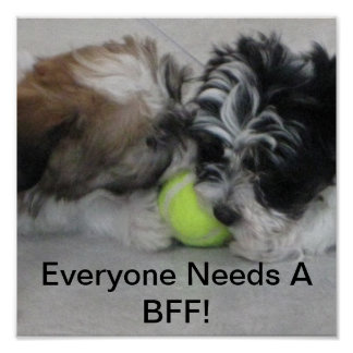 Havanese puppies - Friendship - BFF Poster