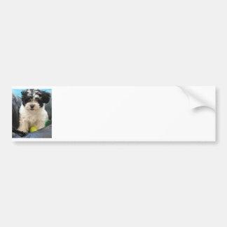 Havanese Rescue Puppy Black White Bumper Sticker