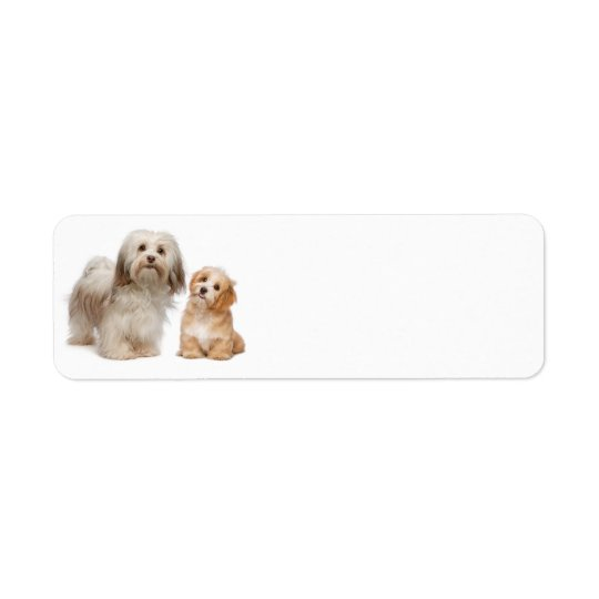 Havanese Return Address Label