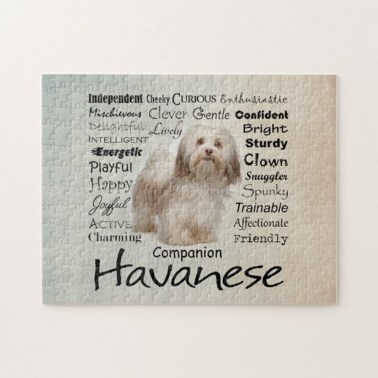 Havanese Traits Jigsaw Puzzle