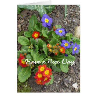 Have a Nice Day-mixed flower bed Card