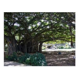 Hawaii Big Tree - Honolulu Postcard