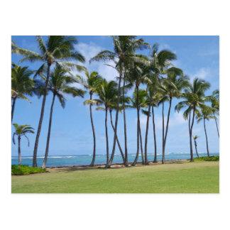 Hawaii Coast Postcard