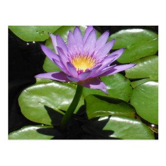 Hawaii Lotus Flower Post Card