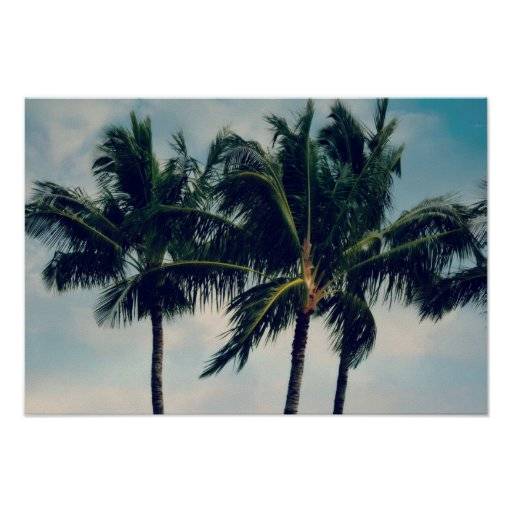 Hawaii Palm Trees Poster