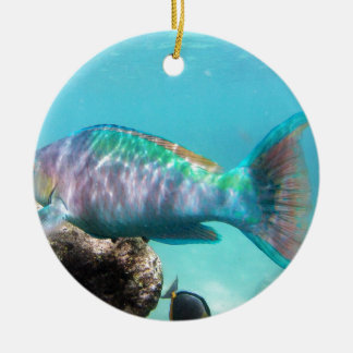 Hawaii Parrot Fish Ceramic Ornament