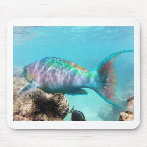 Hawaii Parrot Fish Mousepad