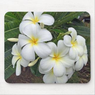 Hawaii Plumeria Flowers Mouse Pad